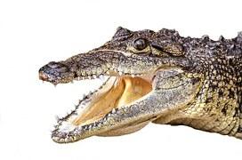 Cuir de crocodile